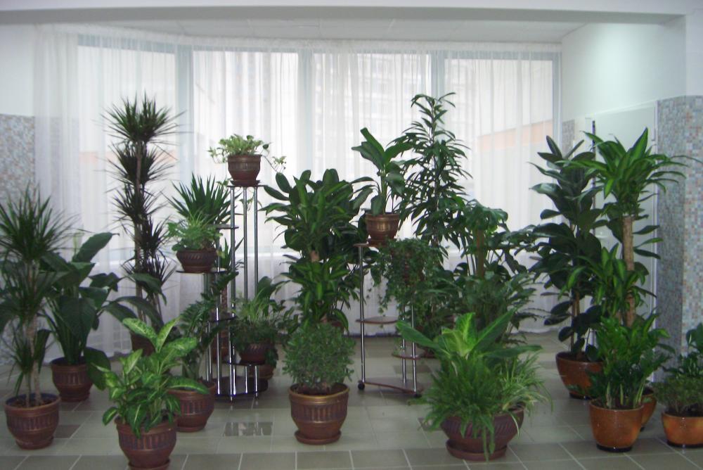 Как в домашних условиях стабилизировать цветы