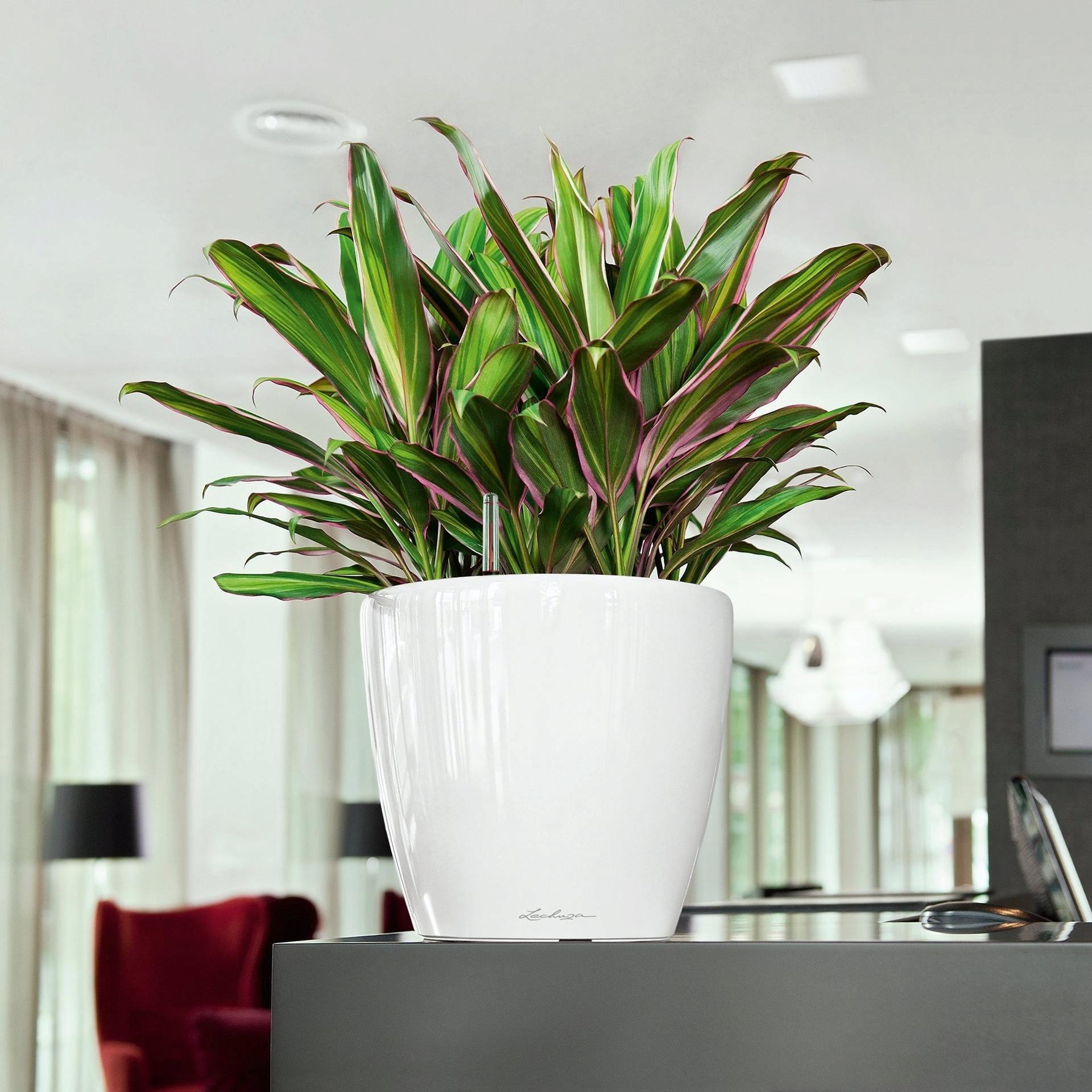 Комнатные растения не требующие много света фото