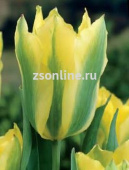 Тюльпан Yellow Spring Green, 5 шт
